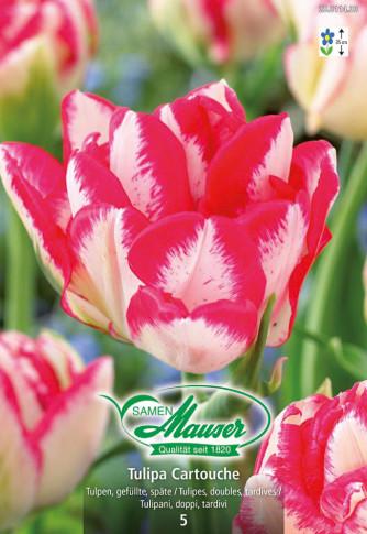 Cartouche, Späte, gefüllte Tulpe, 5 Zwiebeln