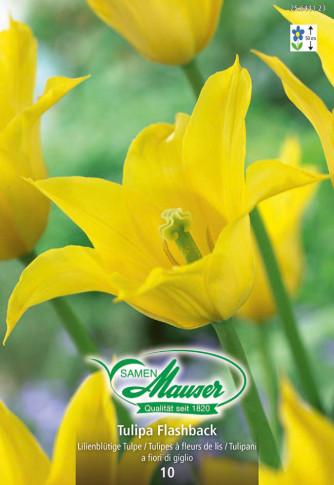 Flashback, Lilienblütige Tulpe, 10 Zwiebeln