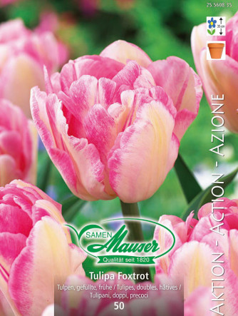 Foxtrot, Frühe, gefüllte Tulpe, 50 Zwiebeln