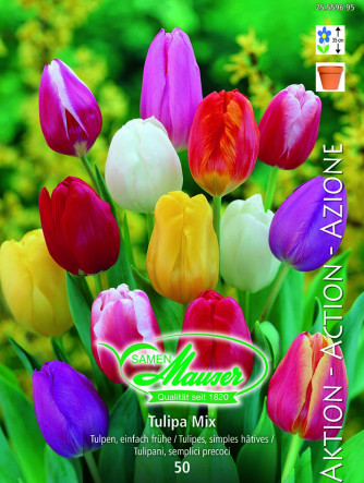Tulpen Mischung, Aktion, 50 Zwiebeln