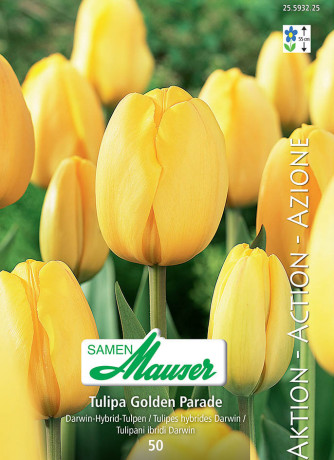 Golden Parade,  Action, Tulipe hybride Darwin, 50 bulbes