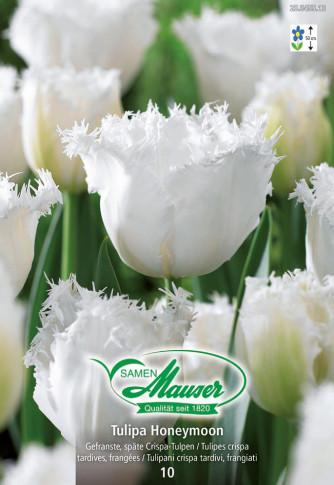 Honeymoon, Crispa-Tulpe, 10 Zwiebeln