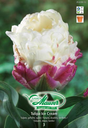 Tulipa Ice Cream, Späte, gefüllte Tulpe, 3 Zwiebeln