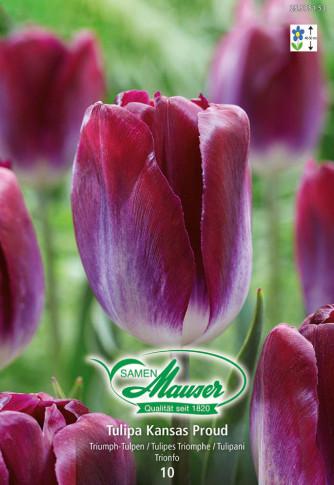 Kansas Proud, Tulipe Triomphe, 10 bulbes