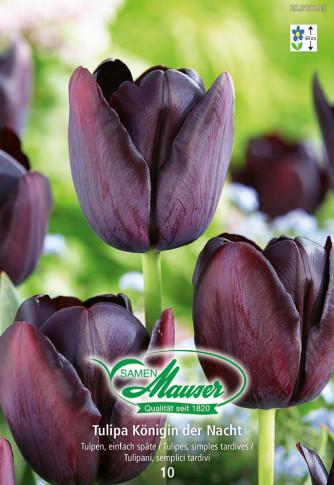 Königin der Nacht, Späte Tulpe, 10 Zwiebeln