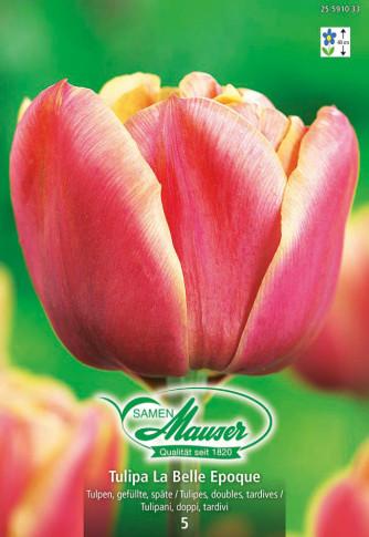 La Belle Epoque, Späte, gefüllte Tulpe, 5 Zwiebeln