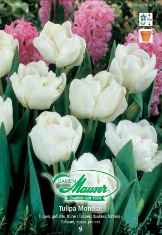 Mondial, Frühe, gefüllte Tulpen, 10 Zwiebeln