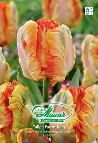 Parrot King, Tulipes Perroquet, 10 bulbes