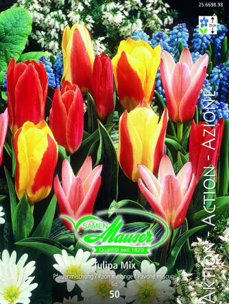 Tulpen Pfauen-Mischung, Aktion, 50 Zwiebeln