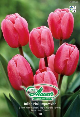 Pink Impression, Darwin-Hybrid-Tulpe, 10 Zwiebeln