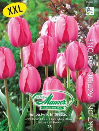 Tulpe Pink Impression, Aktion, 25 Zwiebeln