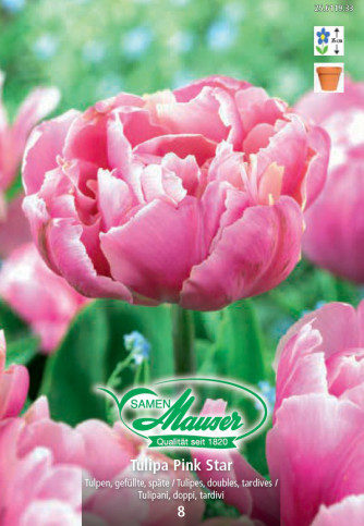 Pink Star, Tulipe double, tardive, 10 bulbes