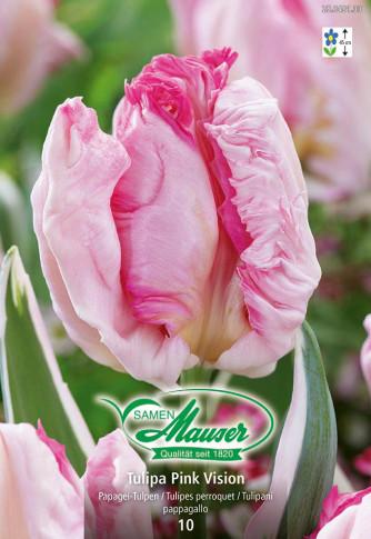 Pink Vision, Papagei-Tulpe, 10 Zwiebeln