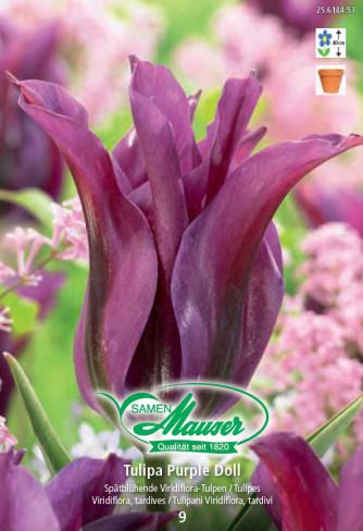 Purple Doll, Tulipe Viridiflora, 10 bulbes