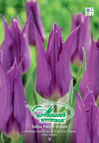 Purple Dream, Tulipe à fleur de lis, 10 bulbes