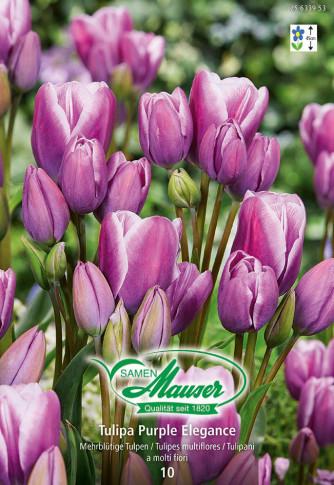 Purple Elegance, Tulipe Bouquet, 10 bulbes