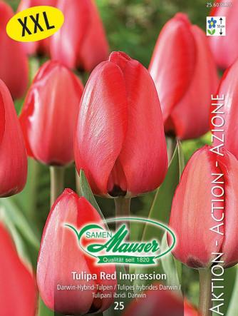 Tulpe Red Impression, Aktion, 25 Zwiebeln