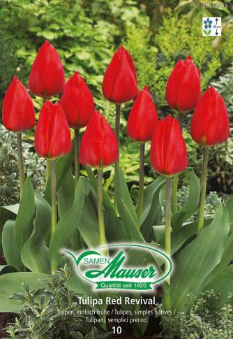 Red Revival Frühe Tulpe, 10 Zwiebeln