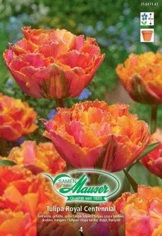 Royal Centennial, Crispa-Tulpe, 5 Zwiebeln