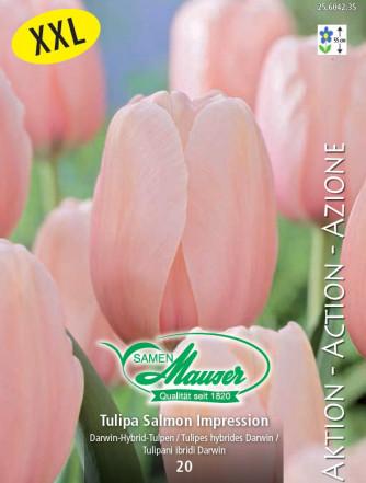 Tulpe Salmon Impression, Aktion, 25 Zwiebeln