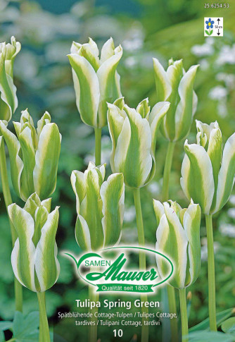 Spring Green, Viridiflora-Tulpe, 10 Zwiebeln