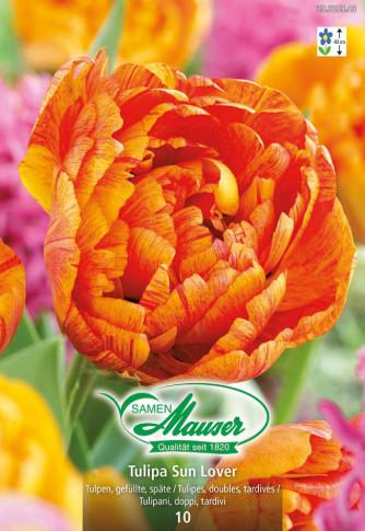 Sun Lover, Späte, gefüllte Tulpe, 10 Zwiebeln