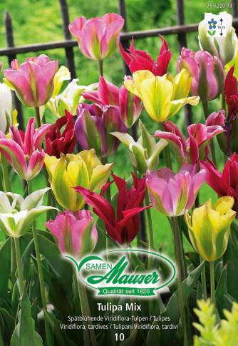 Viridiflora Tulpen Mischung, 10 Zwiebeln