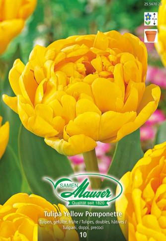 Yellow Pomponette, Frühe, gefüllte Tulpe, 10 Zwiebeln