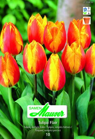 Flair Frühe Tulpe, 10 Zwiebeln