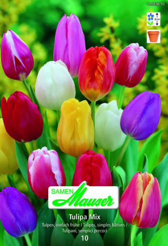 Tulpen Mischung, 10 Zwiebeln