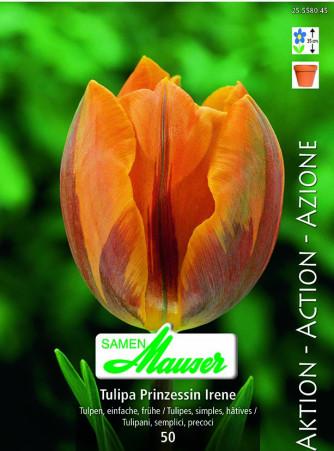 Tulpe Prinzessin Irene, Aktion, 50 Zwiebeln