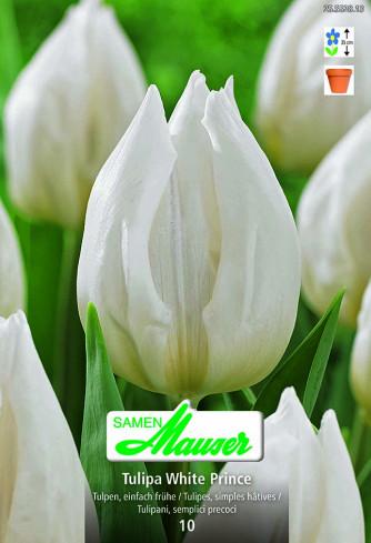 White Prince, Frühe Tulpe, 10 Zwiebeln