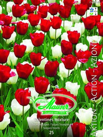 Valentines - Tulpenmischung