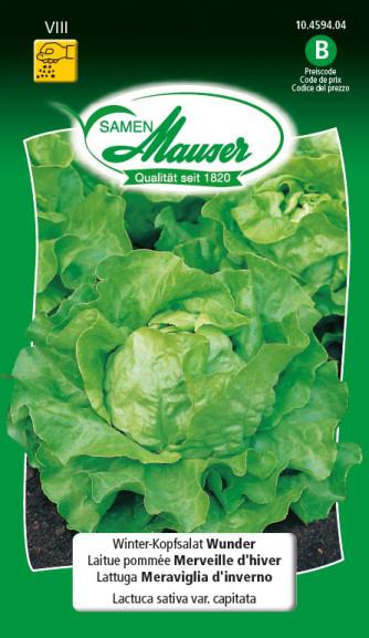 Winter-Kopfsalat Wunder
